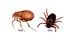 fleas, ticks