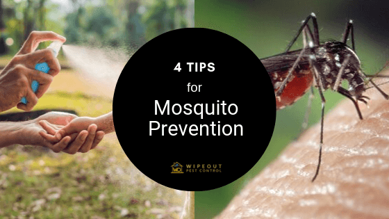 Mosquito prevention