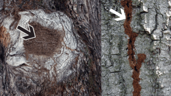 Infested termites tree