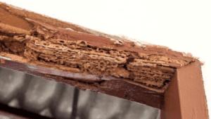 Termites wood tubes
