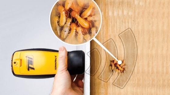 Termites detector