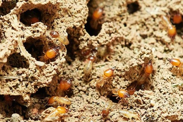 termites control singapore